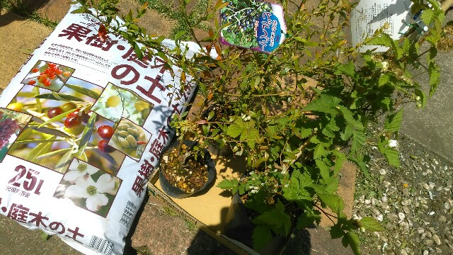 f:id:kimama2016:20170515013023j:image