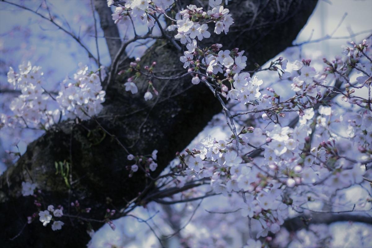 f:id:kimama2016:20200325100946j:plain
