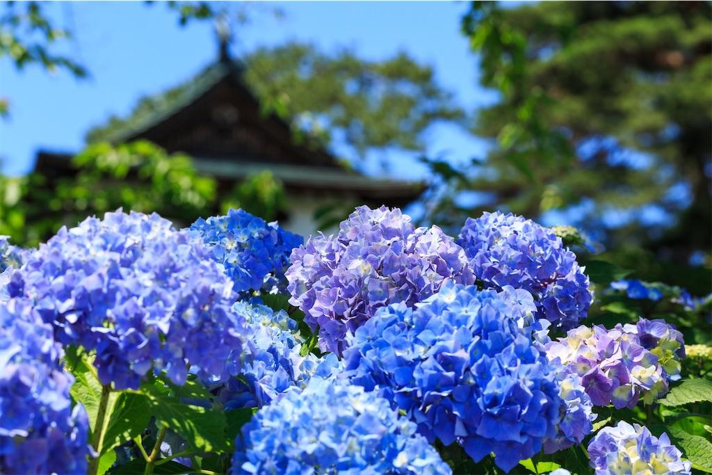 f:id:kimamaneko-miwa:20200623061918j:image