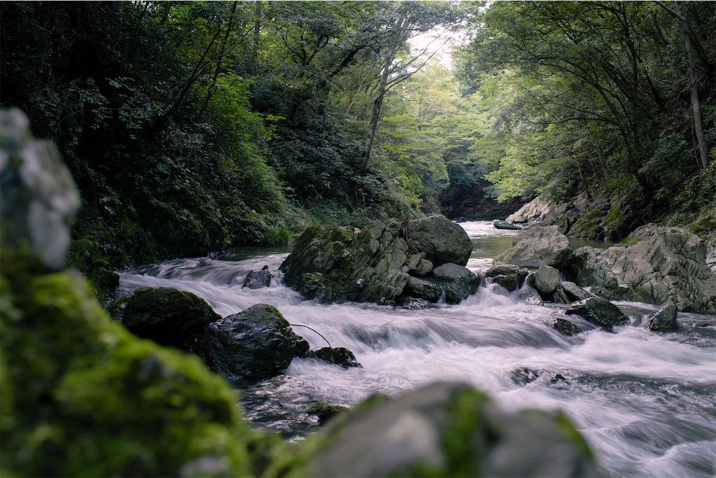 f:id:kimamaneko-miwa:20200717055135j:plain