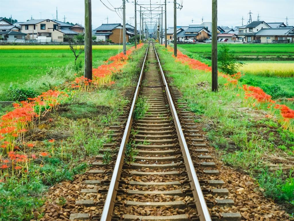 f:id:kimamaneko-miwa:20201207072711j:image