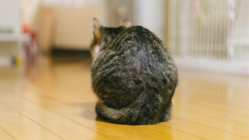 f:id:kimamaneko-miwa:20210201112523j:image