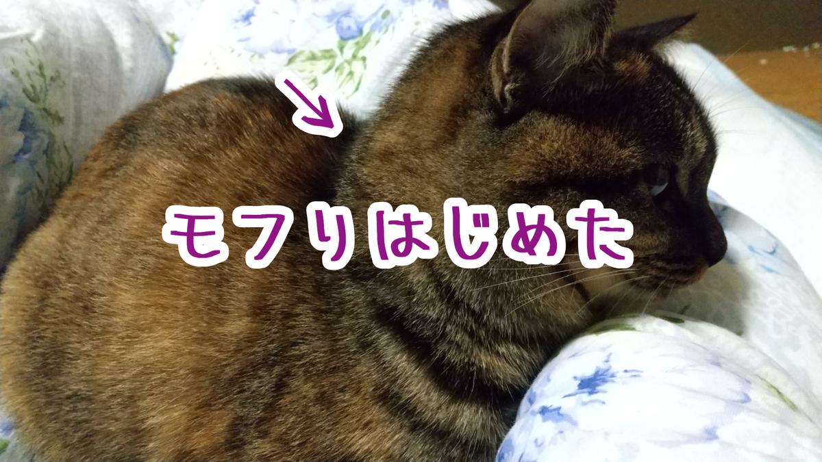 f:id:kimamaniyuuzento:20201027150212p:plain