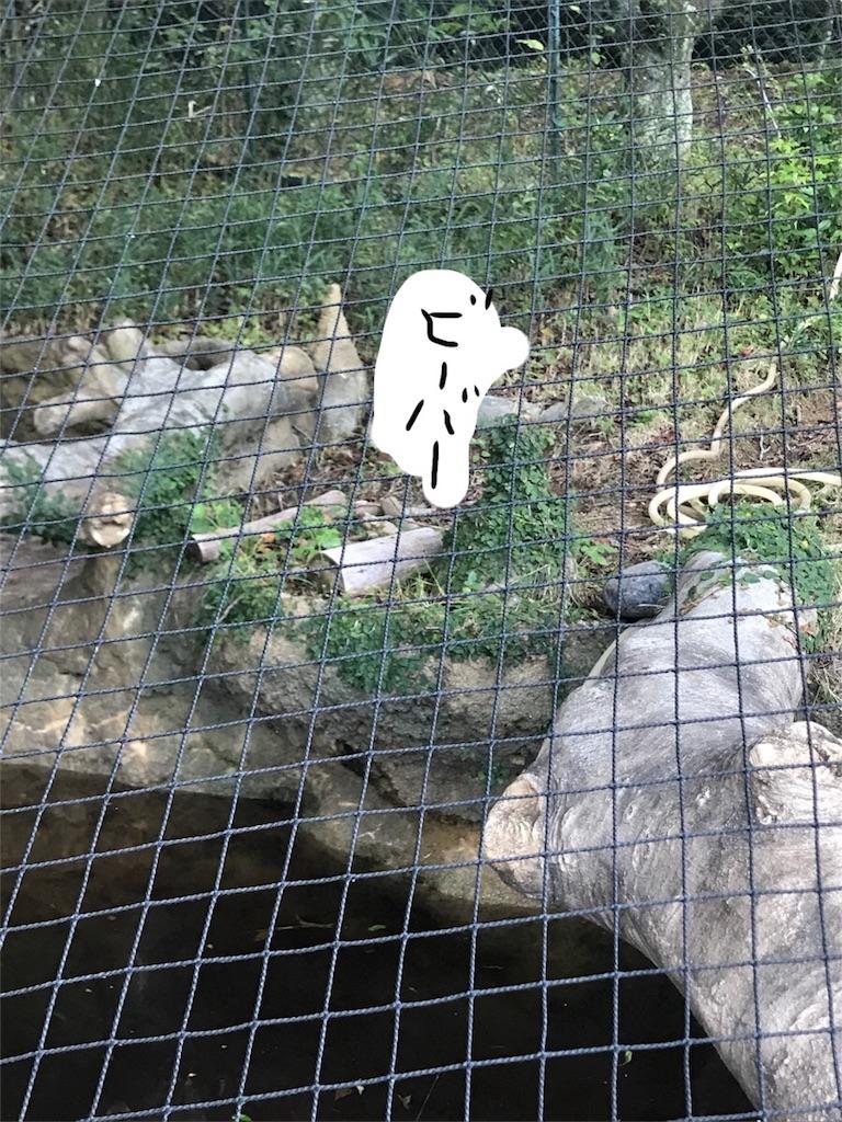 f:id:kimashufu:20170925215204j:image