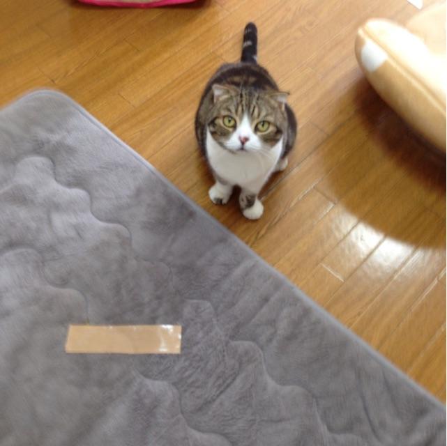 f:id:kimaya:20141103035746j:plain