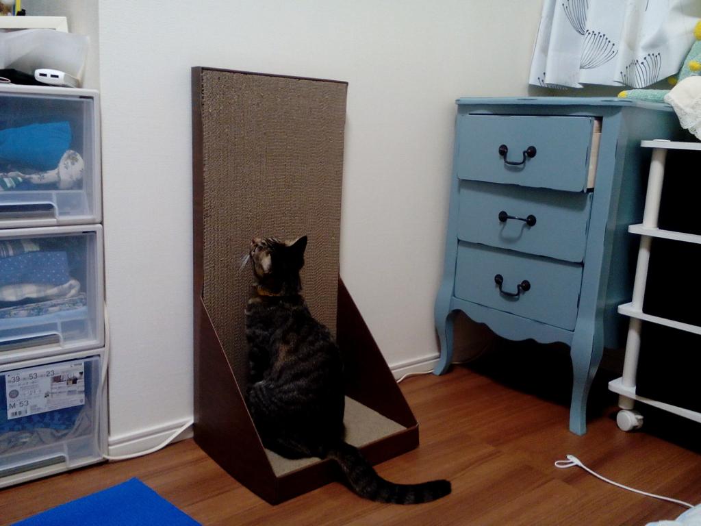ガリガリウォールに座る猫