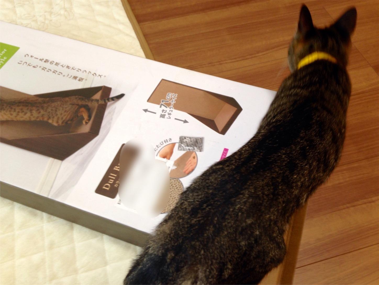 ガリガリウォール箱と猫