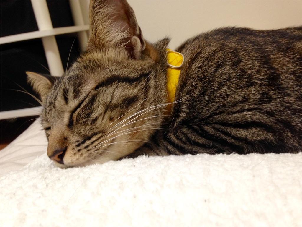 猫と枕と新品の枕カバータオル