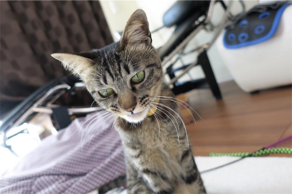 猫あくび直前