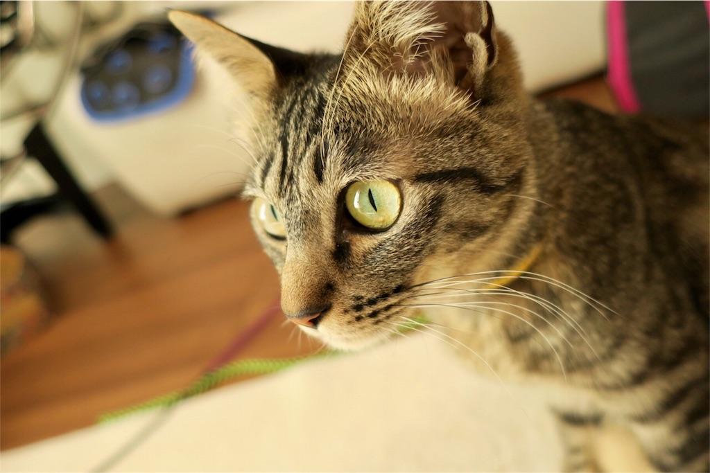 猫と太陽光