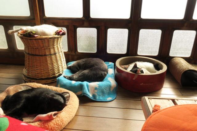 古民家保護猫カフェ Cafe Gatto縁側