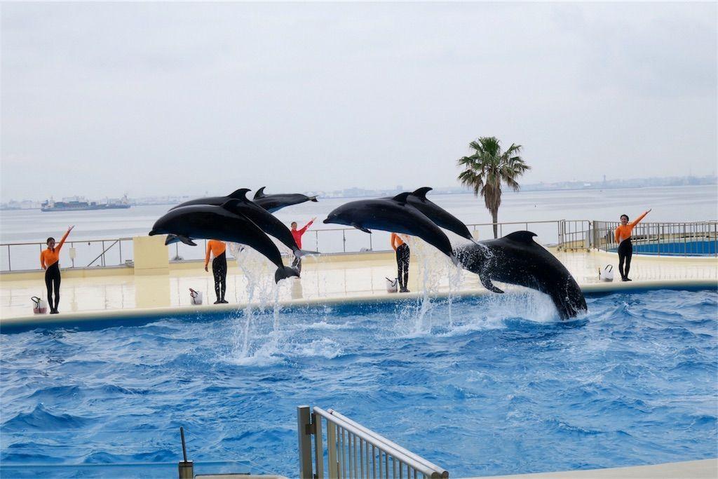 マリンワールド海の中道 イルカの跳躍