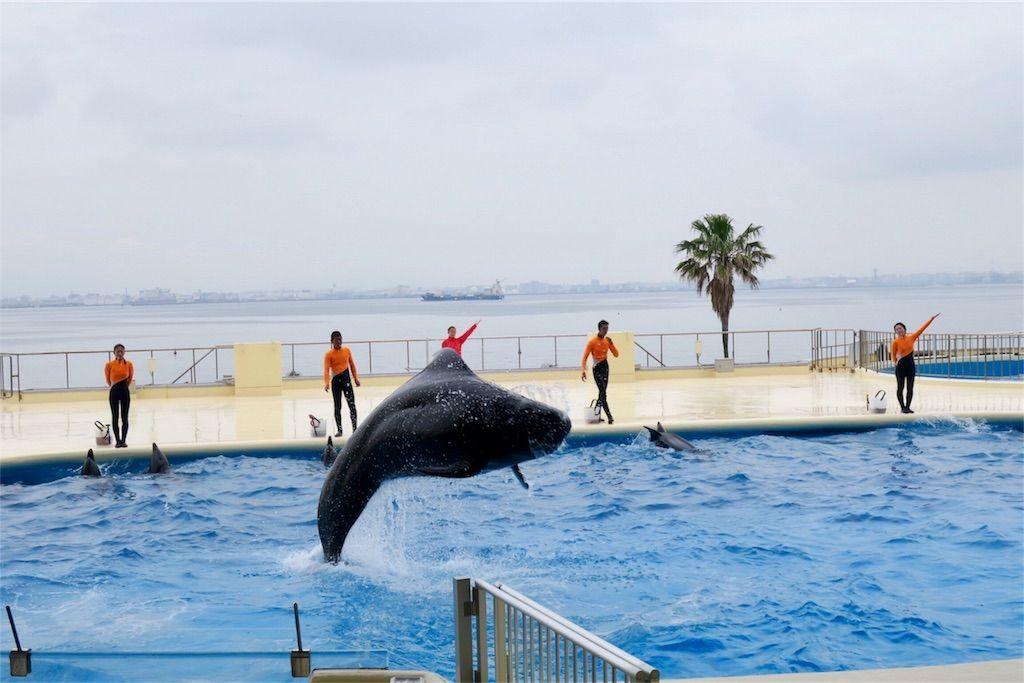 マリンワールド海の中道のイルカショーにはクジラもいる