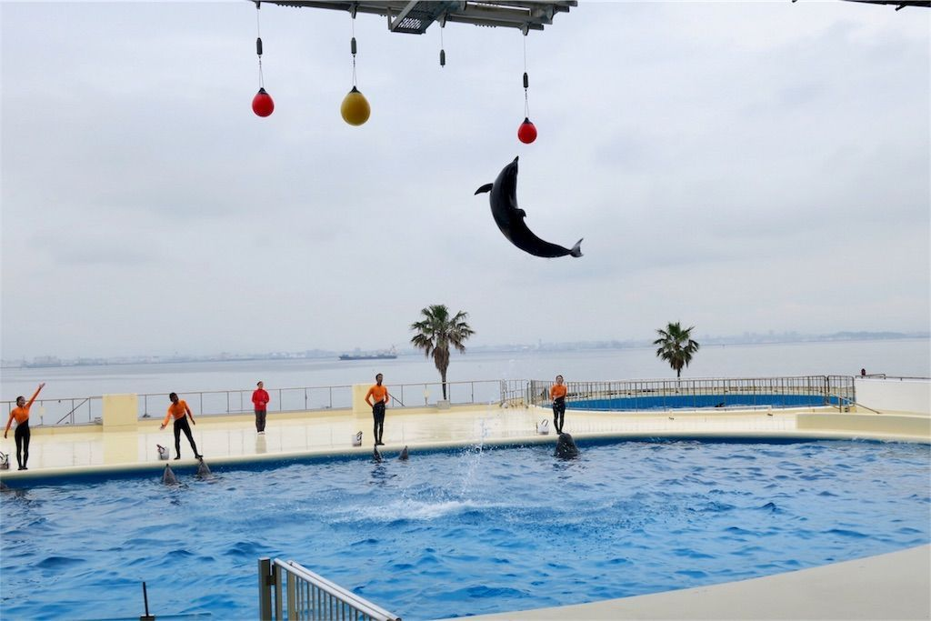 マリンワールド海の中道のイルカは高く飛ぶ ボール