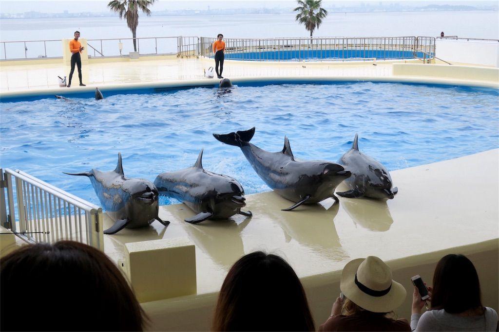 マリンワールド海の中道のイルカは並んで挨拶する