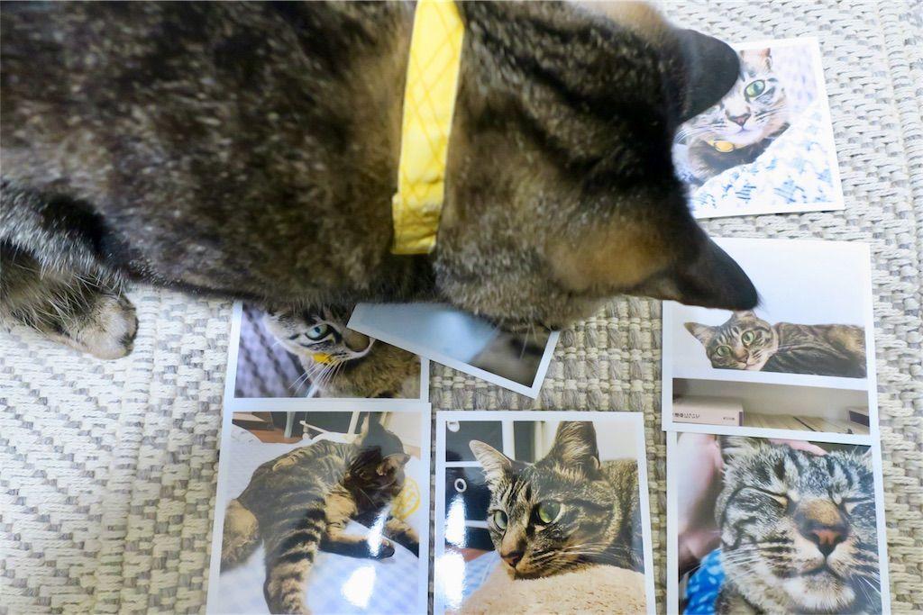 ALBUSで注文したましかく写真と猫