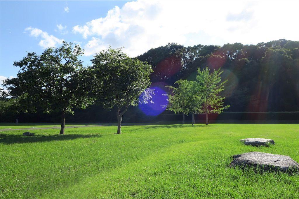 太宰府政庁跡 風景 木々