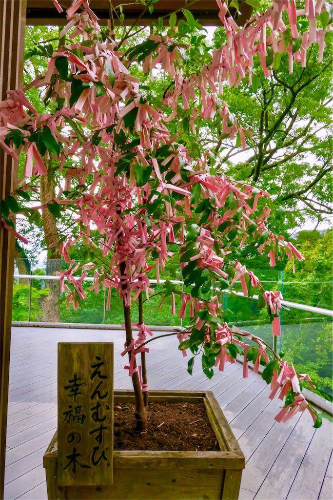 竈門神社 えんむすびの木 幸福の木