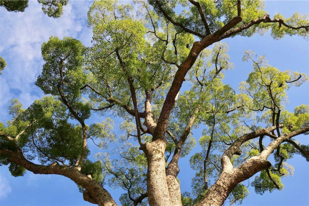樹木 春らしい感じの緑