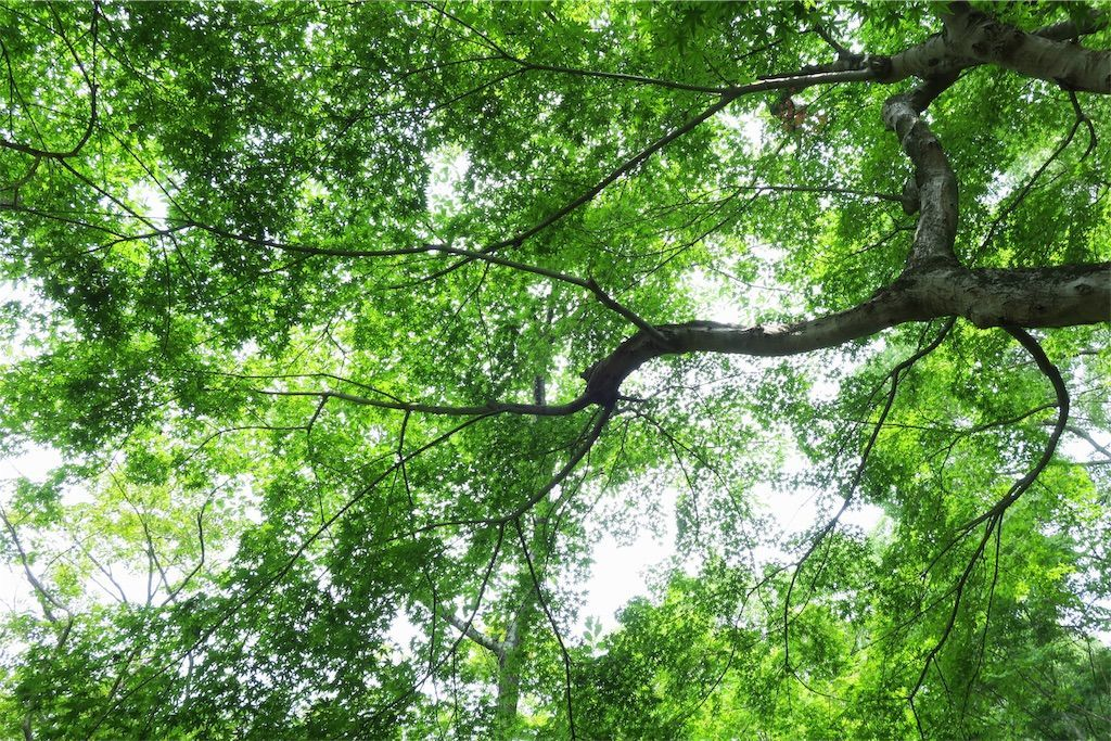 竈門神社の木々