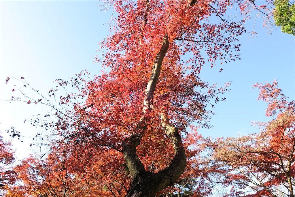 f:id:kimaya:20201115122748j:image