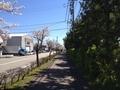桜西部緑地公園4