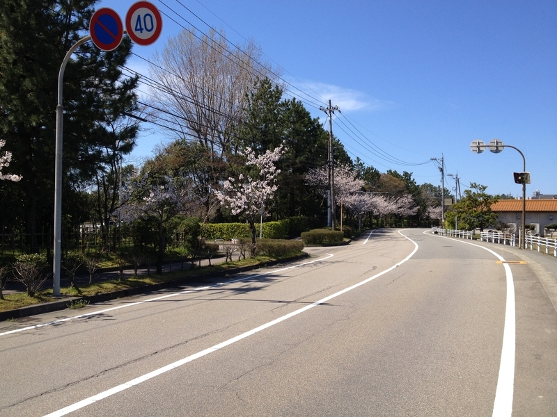 桜西部緑地公園3