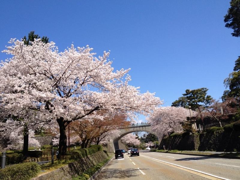 桜兼六園4