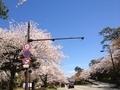桜兼六園3