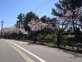 桜西部緑地公園6