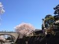 桜兼六園6
