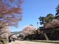 桜兼六園5