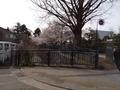 桜21世紀美術館横1
