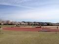 桜陸上競技場8