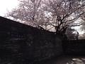 桜陸上競技場7