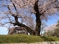 桜陸上競技場6