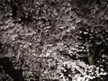 桜石川門3
