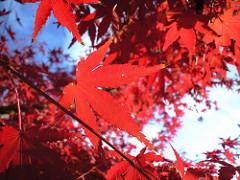 大仏山公園(2008年秋):CA3A0009.JPG