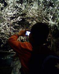 松阪城の夜桜、撮影中