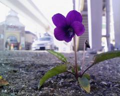 歩道橋の下の花