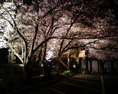小児科の夜桜 #matsusaka