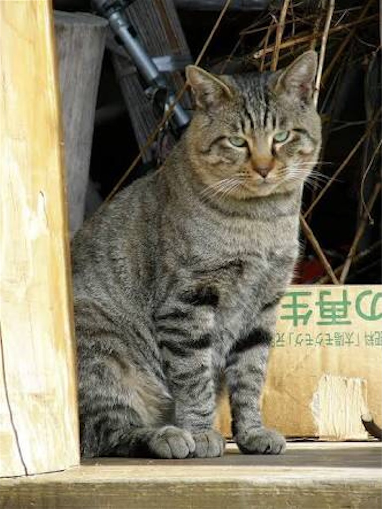 f:id:kimioitosaki:20161027145241j:image