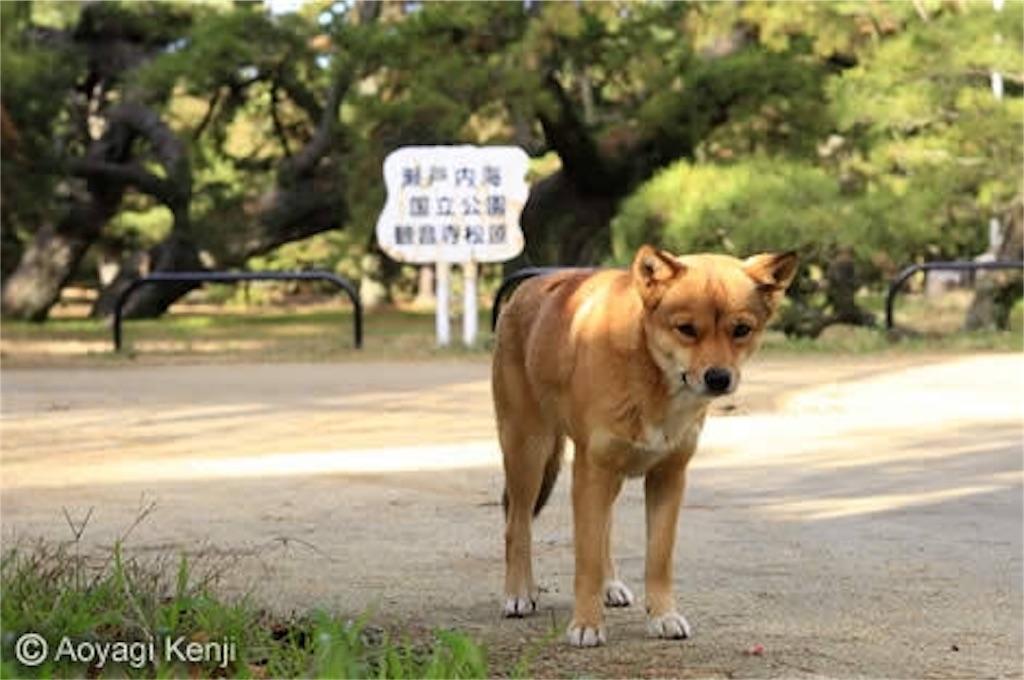 f:id:kimioitosaki:20161027164659j:image