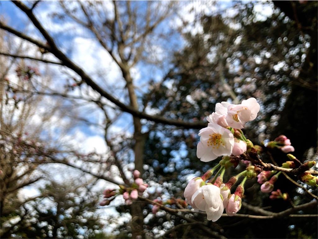 f:id:kimono-miko:20180425100322j:image