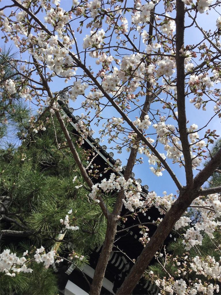 f:id:kimono-zoo:20180325004620j:image