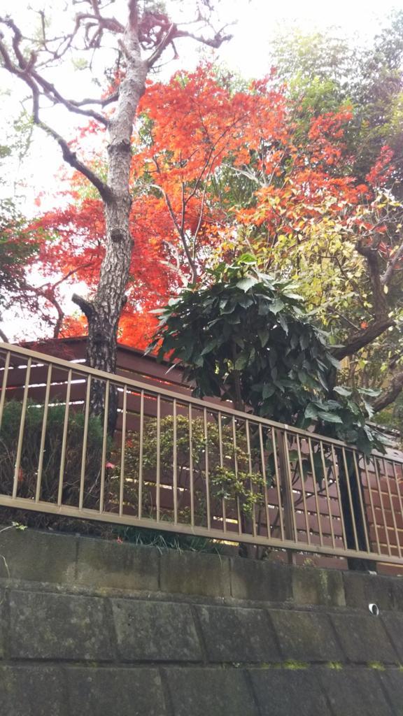 f:id:kimono37konomi:20161201150124j:plain