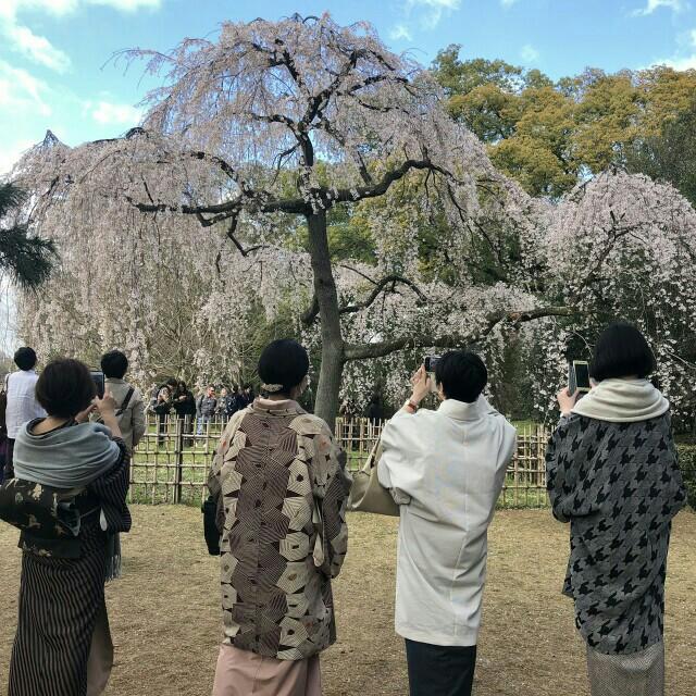 f:id:kimonohajimekaeru:20190403231124j:plain