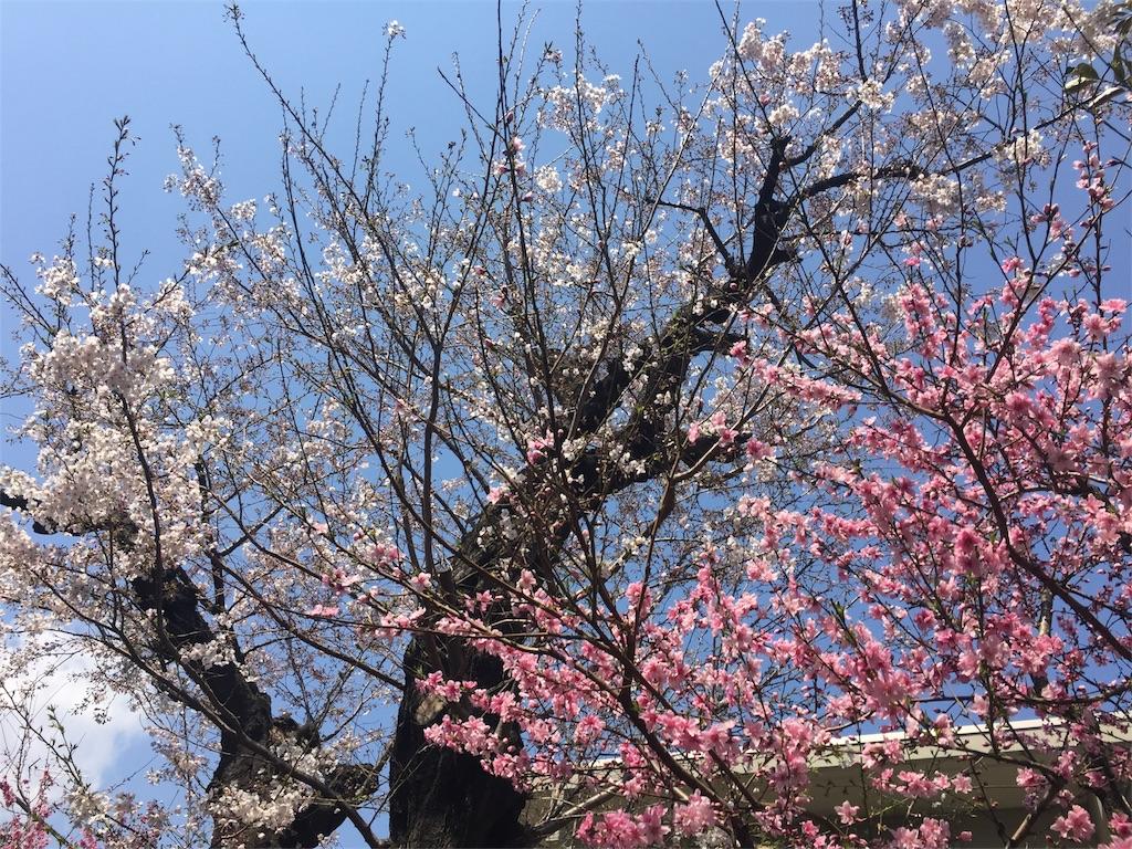 f:id:kimonox:20170404172132j:image