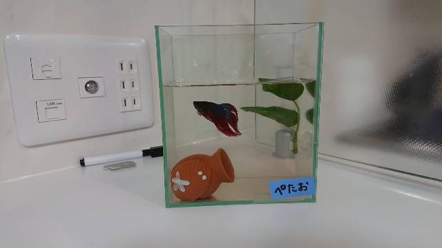f:id:kimotamakachan:20190428015850j:image