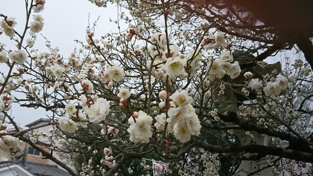 f:id:kimotokanata:20180305081820j:plain